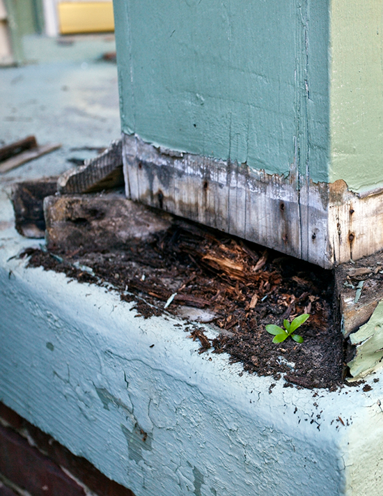 What are the Most Common Signs of Termites?