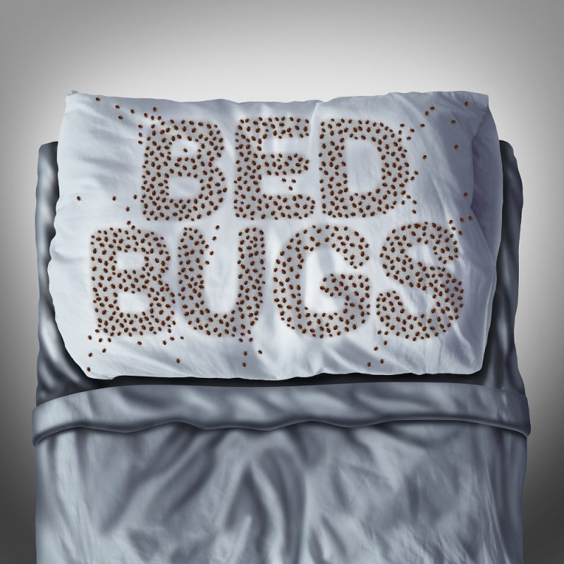 bedbugsholiday