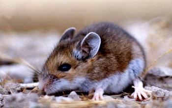 2. eliminate mice