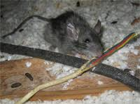 3. best way to get rid of mice