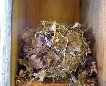 9. mouse nest