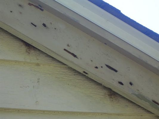 Carpenter Bee damage soffit