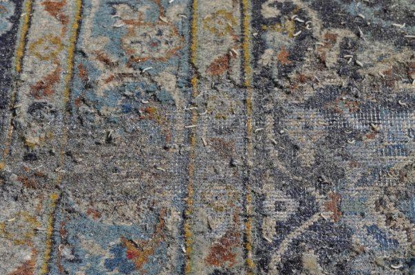 Carpet moth larva damage
