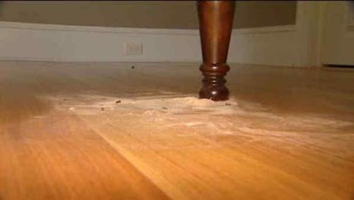 Powderpost Beetle sawdust or frass