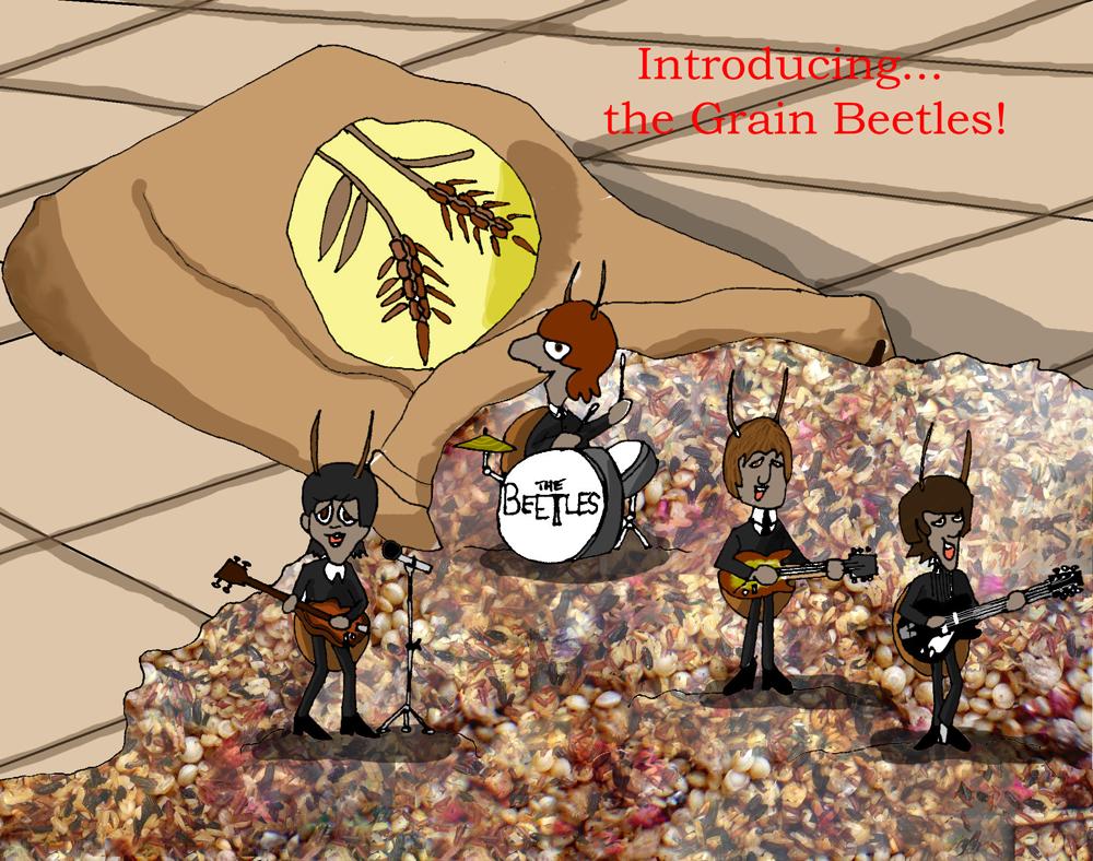 The Grain Beetles1000
