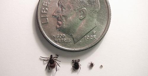 Tick size comparison