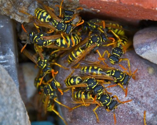 Yellowjackets grouped in bricks e1447608659798