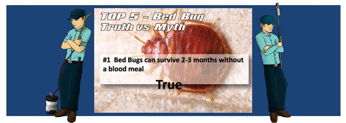 slide bedbug1 1