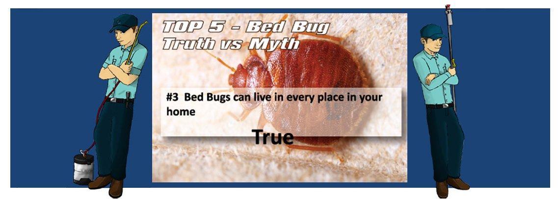 slide bedbug3 1