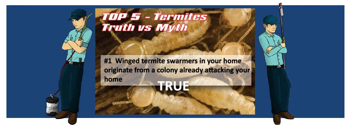 slide termite1