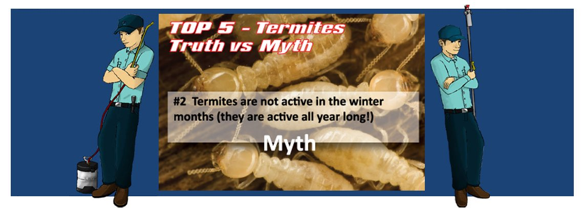 slide termite2