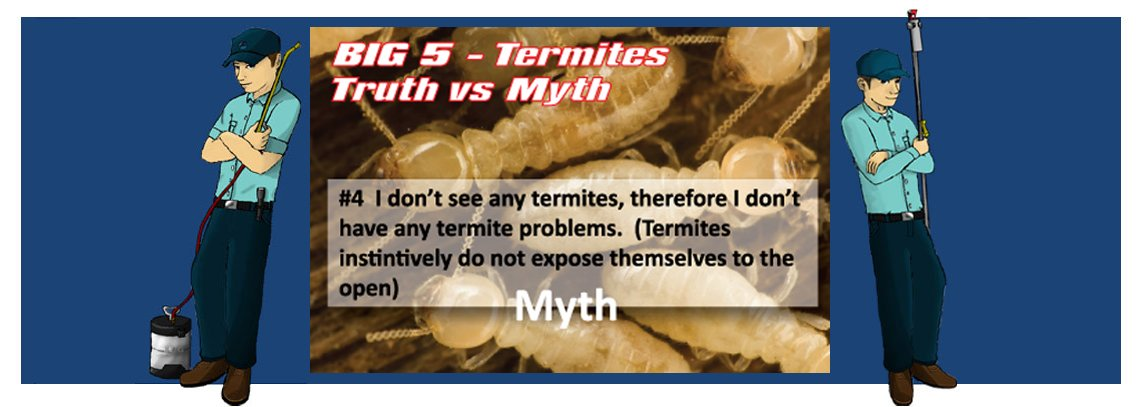 slide termite4