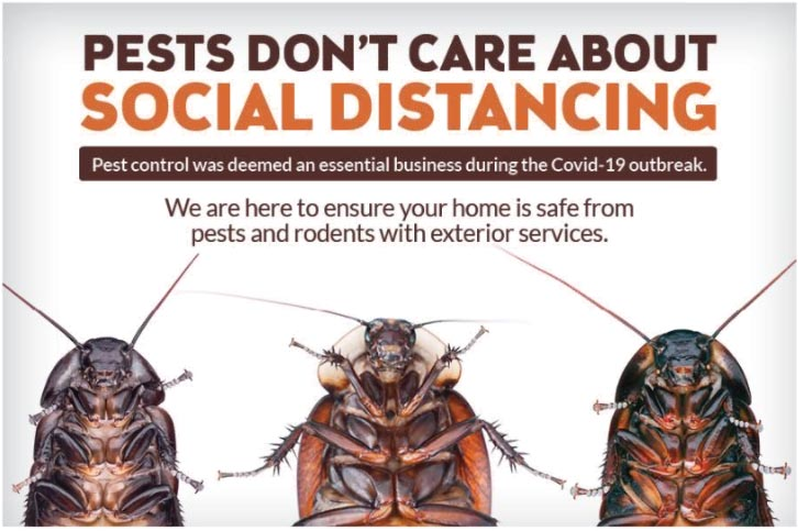 Pest Social Distancing
