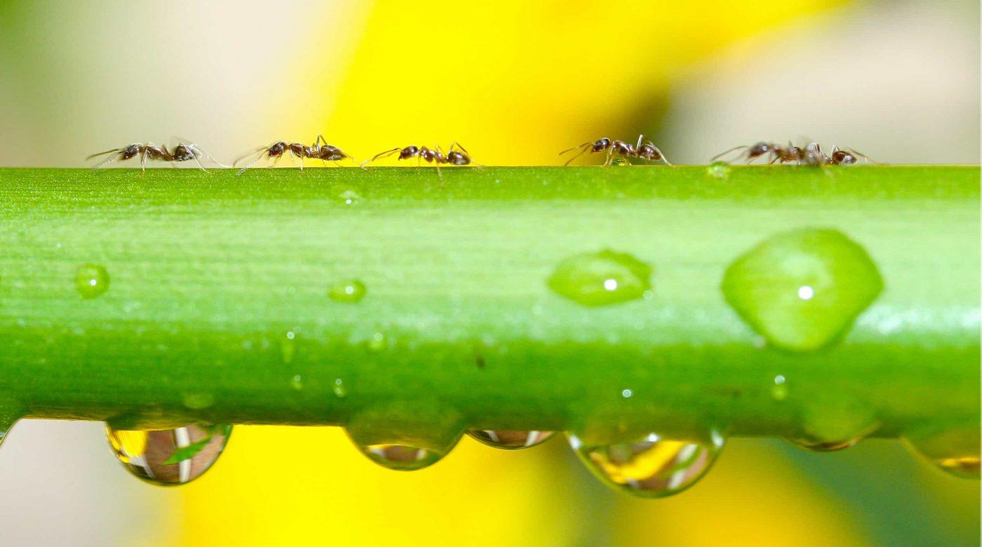 where do ants go when it rains