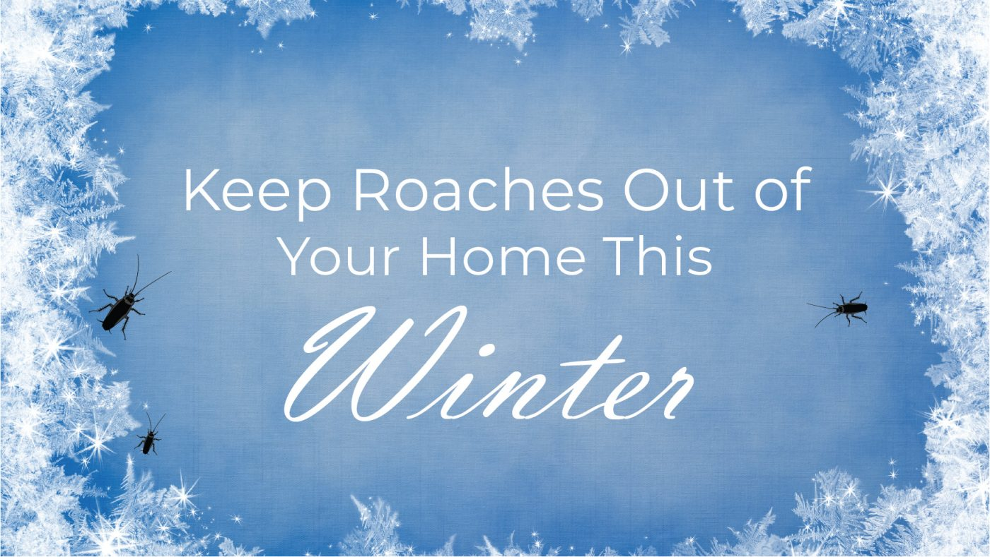Keep Roaches Out This Winter