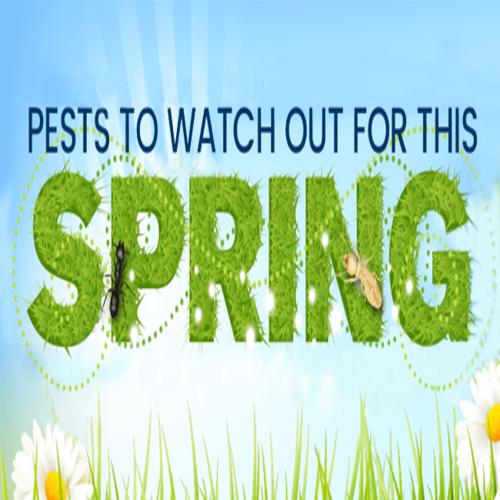 spring pests 3 500x500