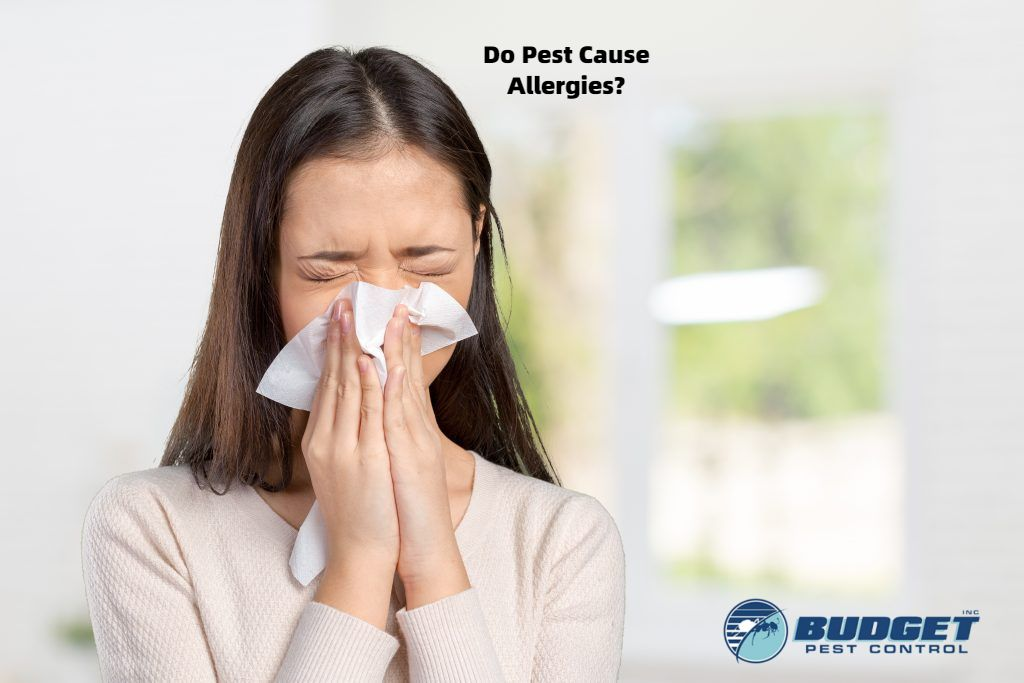 do pests cause allergies