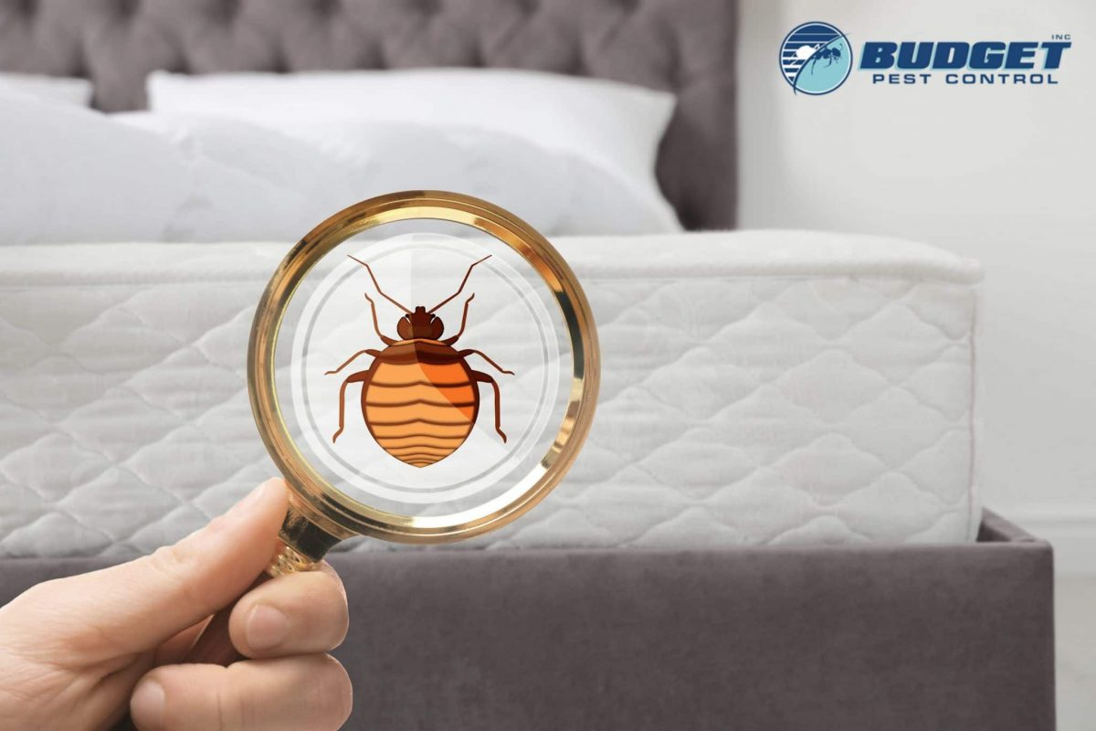 bed bugs scaled 1