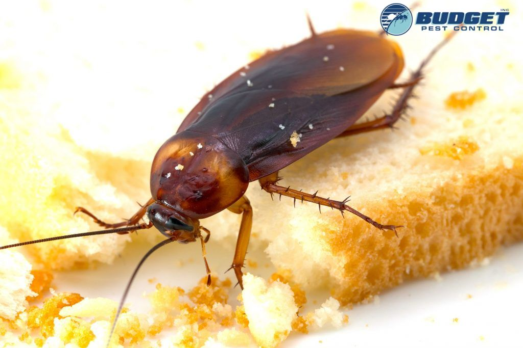 cockroach eating 2 1024x683 1