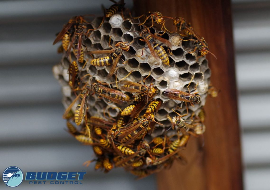 stinging insects nest